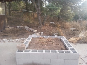 Raised bed under large pinyon tree