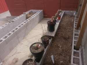 Raised Beds 7 and 1