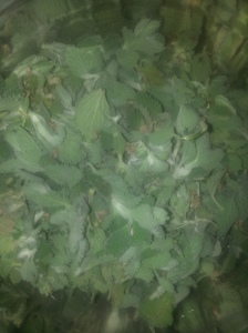 Horehound Leaves